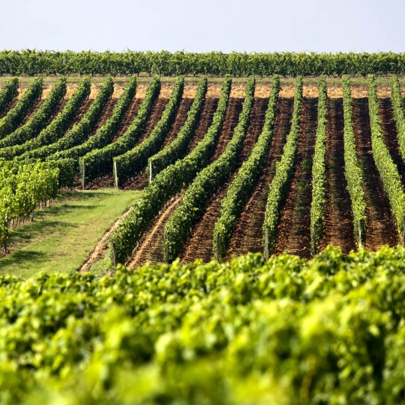 vigne-france