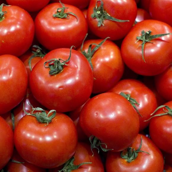 tomates-brevet